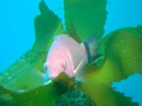 Underwater Observatory